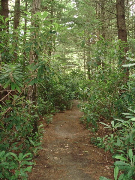 Rhododendron Loop Trail – Fitzwilliam NH
