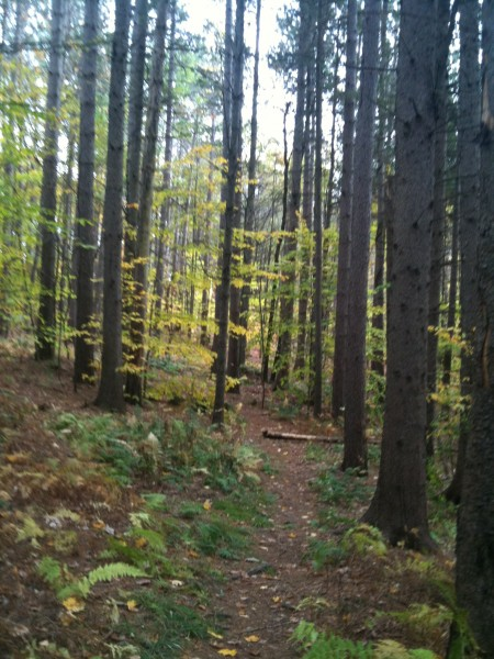 Fox Forest Black Gum Swamp Loop Trail – Hillsborough NH