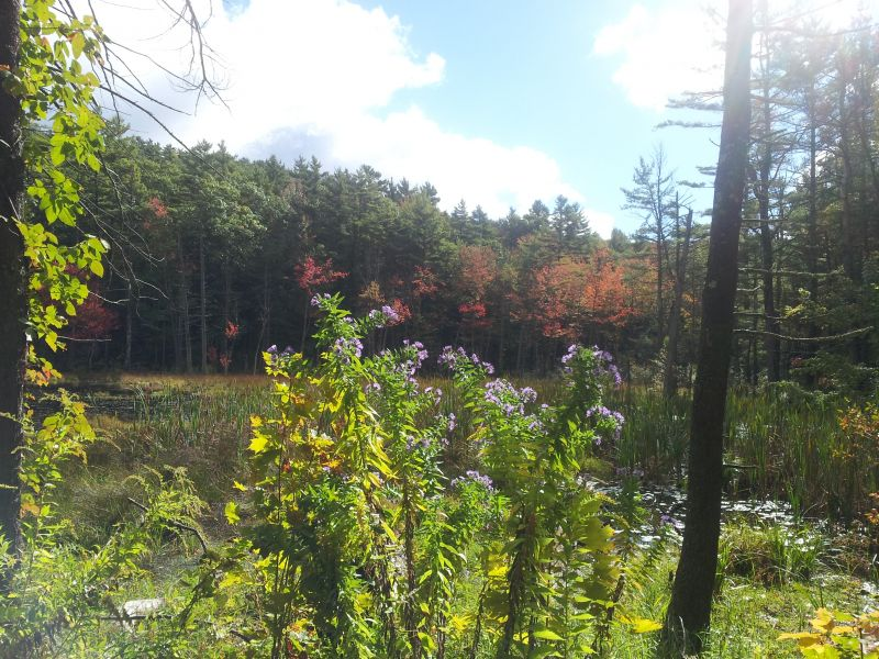 Bearsden Conservation Area – Athol MA