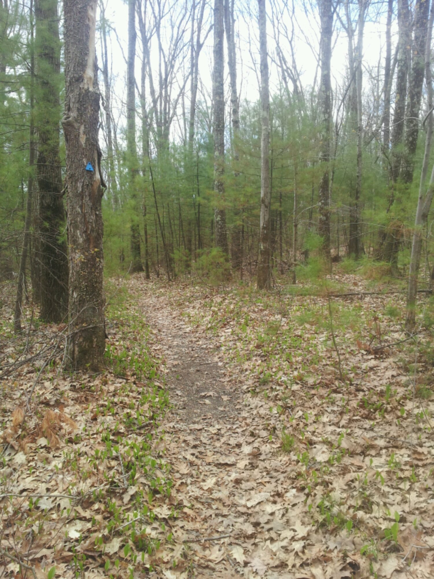 Upton State Forest – Upton, MA
